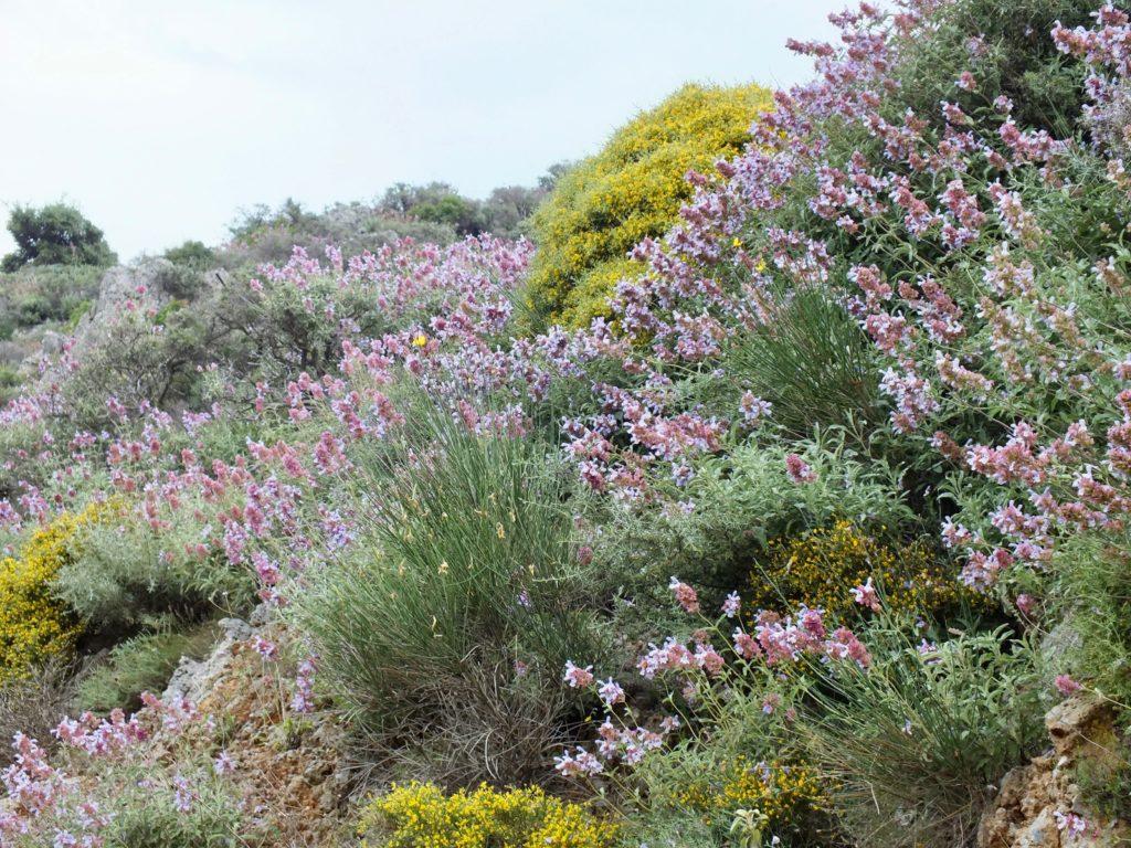 Plante Méditerranéenne Sans Arrosage accueil - gérard weiner - plantes de terrains secs